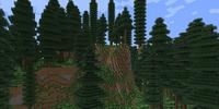 Temperate Rainforest