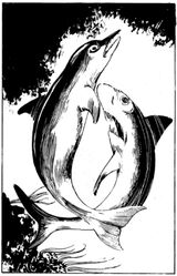 FF Dolphin