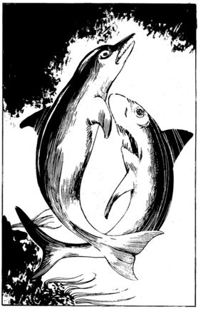 File:FF Dolphin.jpg
