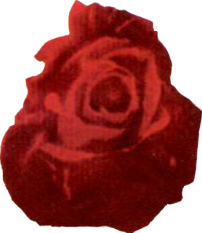 File:Desert Rose.png
