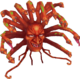 MedusaDS