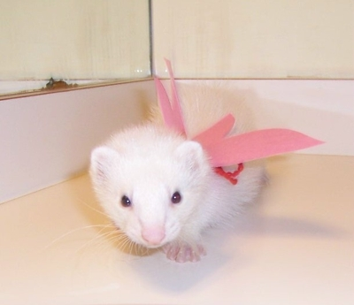 File:Ferretfairywings3.jpg
