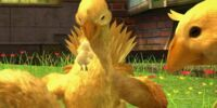 Chocobo (Final Fantasy XIII)