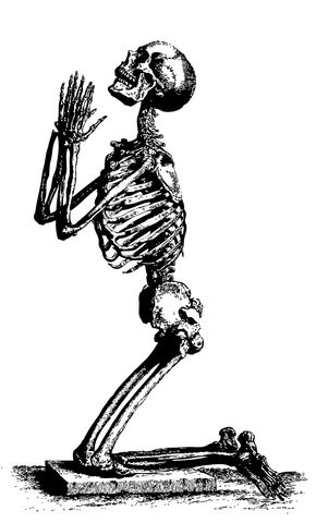 File:Mlf-skeleton.jpg