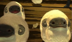 Nautilus Sheep and Hina