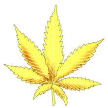Cannabis sunshine skunk