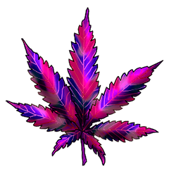 File:Cannabis polar lights.png