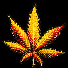 Cannabis golden shot
