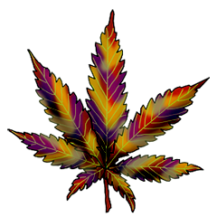 File:Cannabis holland hope.png