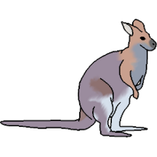 Pet Wallaby