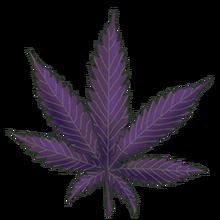 Purple danx