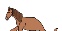 Pet Seahorse