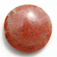 Red-horn-coral-3140-500x500