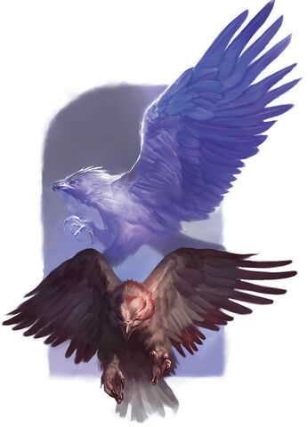 File:Hawks - Matias Tapia.jpg