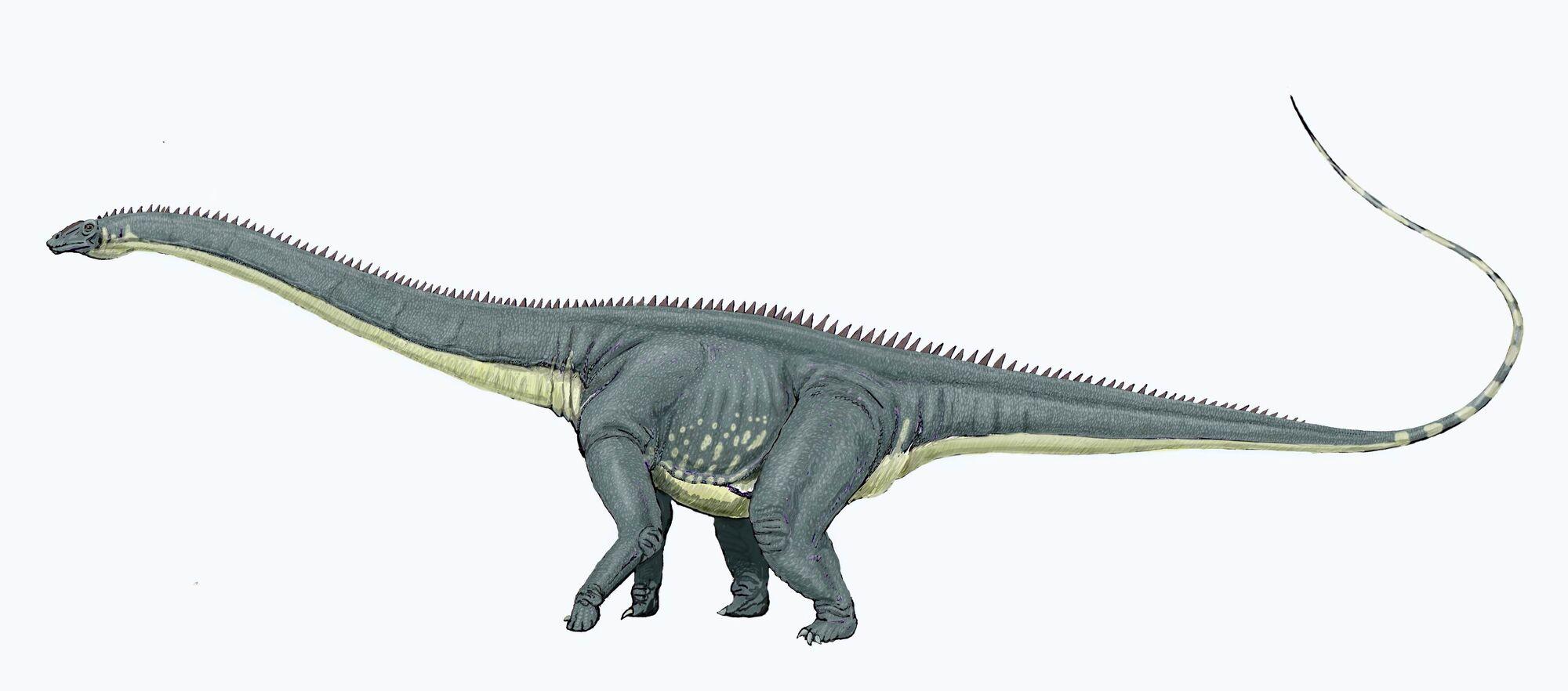 Diplodocus | Fossil Wiki | Fandom powered by Wikia