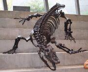 Varanus priscus Melbourne Museum