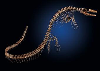 Mosasaur123