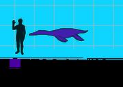 Dolichorhynchops scale