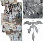 Microraptor nature d