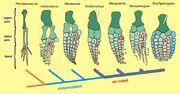 Ichthyosaur flippers3