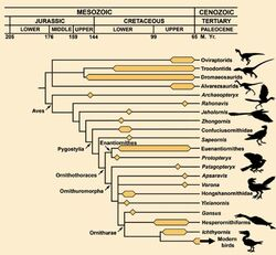 Dino-bird genealogical relationships