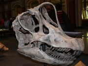 BrachiosaurusP1060062