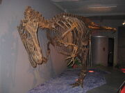 Allosaurus-Replikat-Sauriermuseum