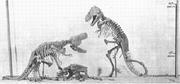 AMNH rex mount