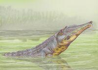 Rutiodon validus 21DB