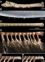 Velociraptor quills1