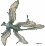 Microraptor2b c