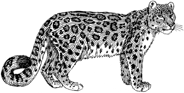 File:Snow Leopard (PSF).png