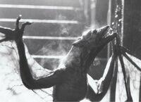 Fright Night 1985 Vampire Bat