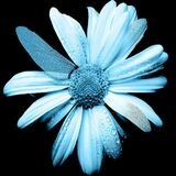 600px-FlowerGlyph.jpg