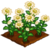 Chamomile-icon