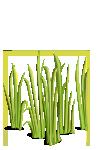 Grass5-icon