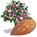 Almond Tree-icon