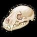 Badger Skull-icon