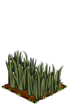 Flax seedling