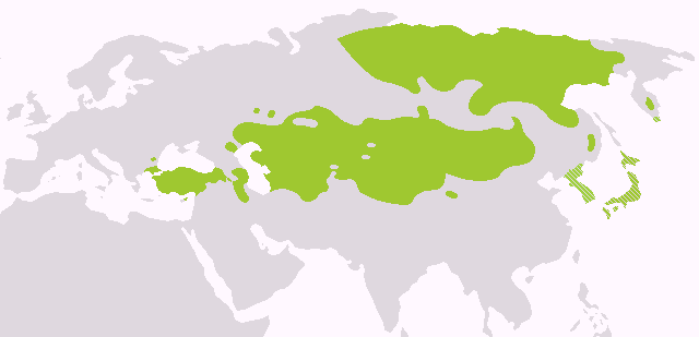 File:Altaic languages.png