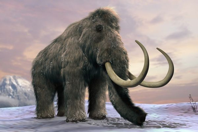 File:WoollyMammoth.jpg