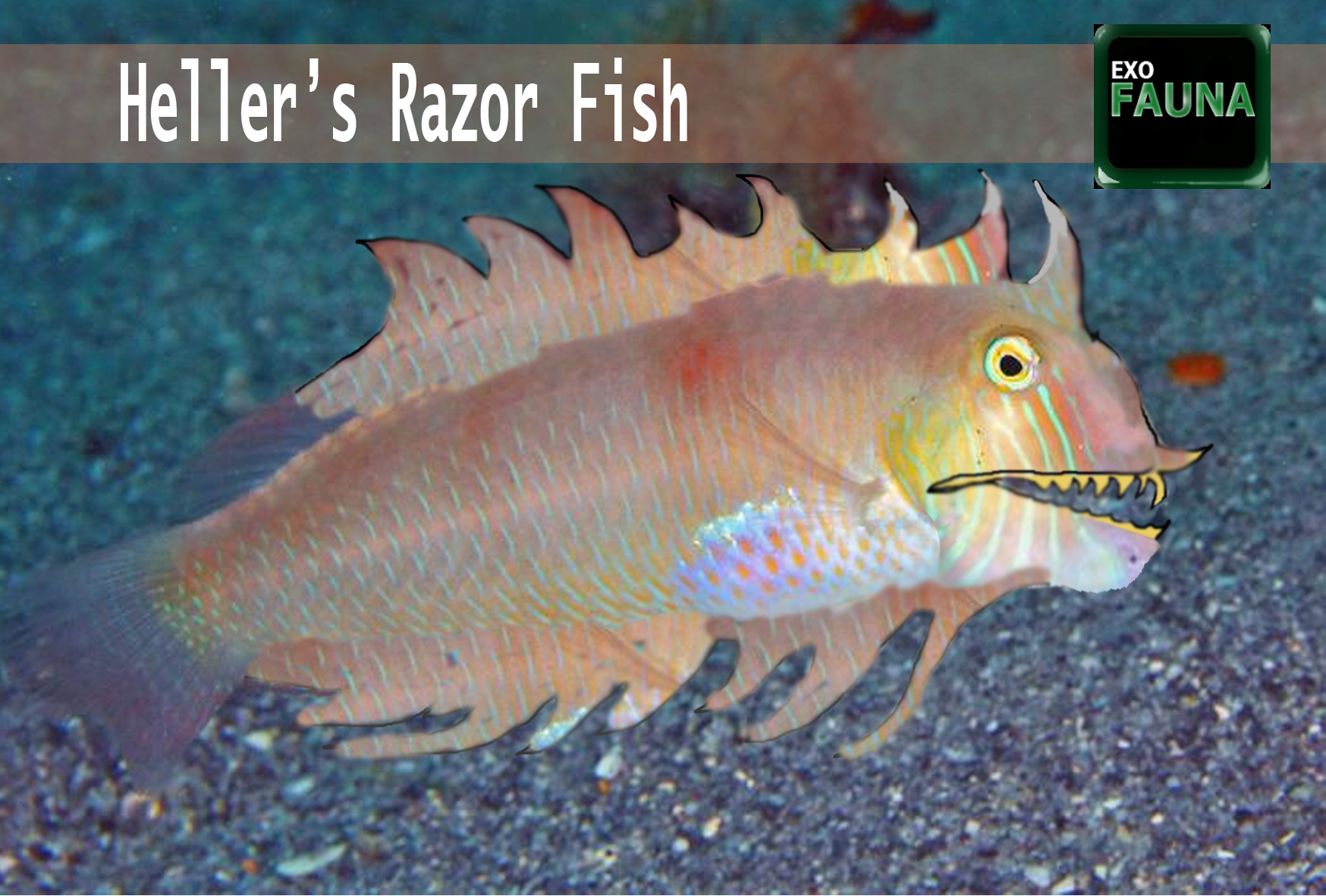 Razor fish | Galnet Wiki | Fandom powered by Wikia