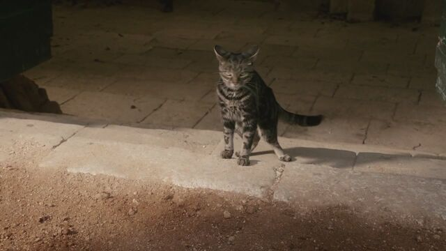File:Cat Arya is chasing Episode 105.jpg