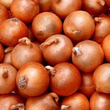 Onionarmy