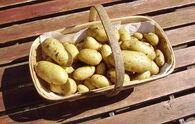 Charlotte Potato Trug