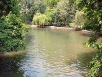 The Cismigiu Lake 1
