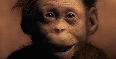 Australopithecus afarensis selam baby