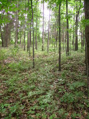 Miami Whitewater Forest 1