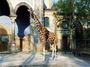 Giraffe-berlin-zoo