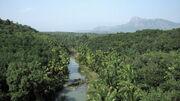 View from Mathur Bridge